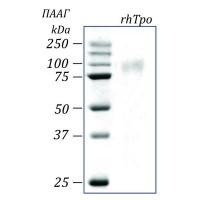 rhTpo, тромбопоэтин человека, рекомбинантный белок, 50 мкг