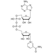 &#945;-Nicotinamide adenine dinucleotide from <I>Saccharomyces cerevisiae</I>, &lt;1&#37; &#946;-isomer, &#8805;95&#37; Sigma N6754